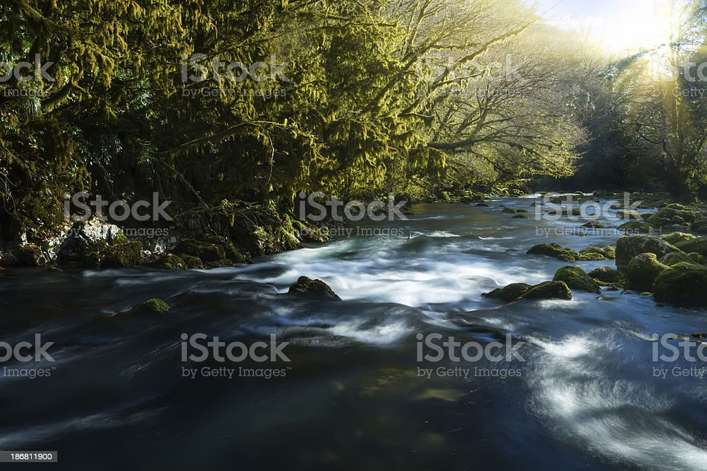 Stream in woods agains tbright sunlight royalty-free stock photo