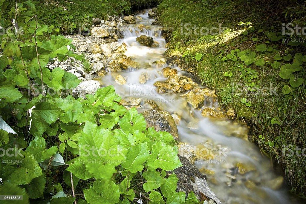 Flusso di acqua nella foresta foto stock royalty-free