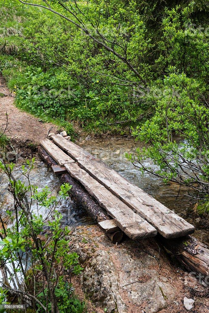 Stream of water (Val di Fassa dolomites) stock photo