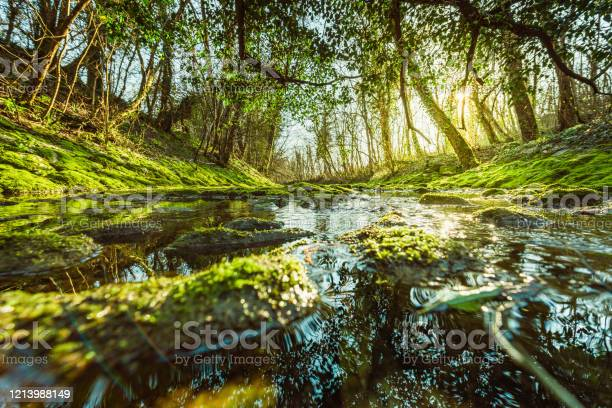 Photo of stream over mossy rocks