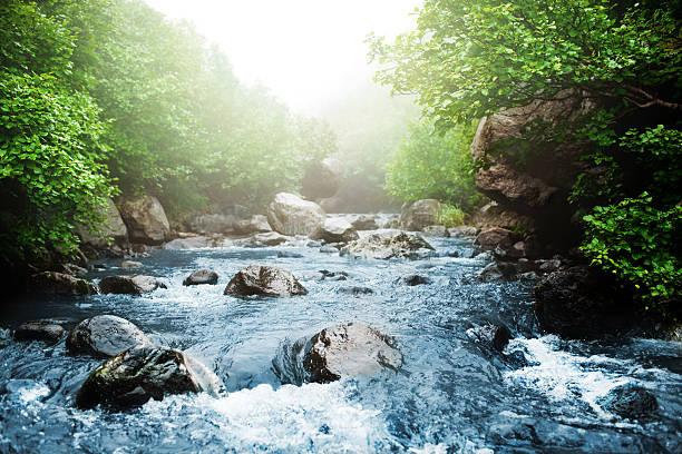 stream - source naturelle photos et images de collection