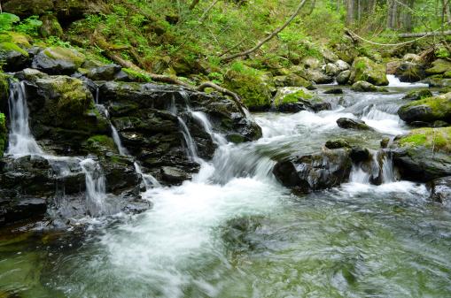 Stones brook flows through lush forest plants.  Long exposure. Sakhalin
