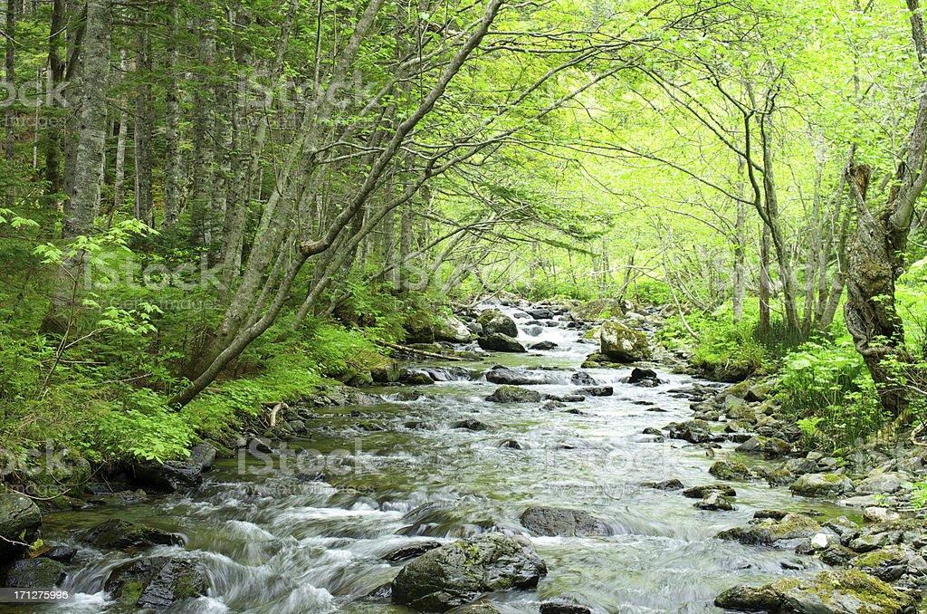 Stream rocks royalty-free stock photo