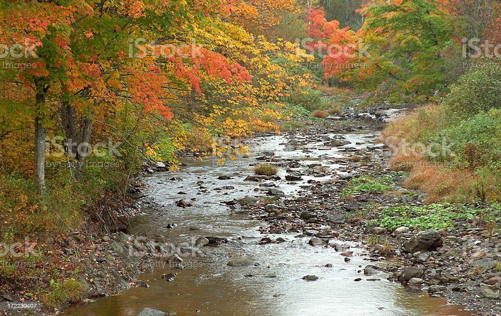 Stream With Autumn Trees royalty-free stock photo