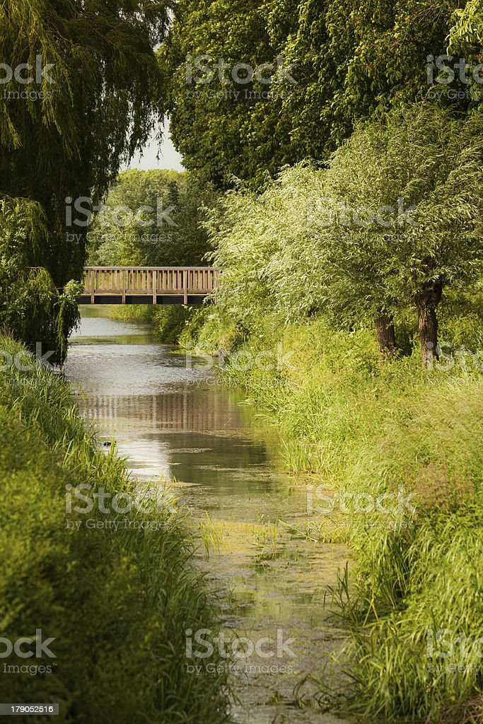 Stream with lots of green foliage royalty-free stock photo