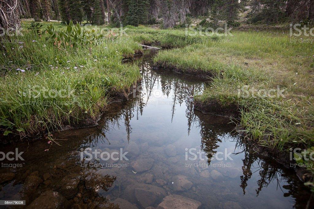 Streambed stock photo