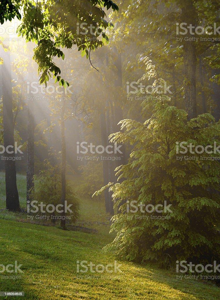 Streaming Sunshine on Foggy Morning royalty-free stock photo