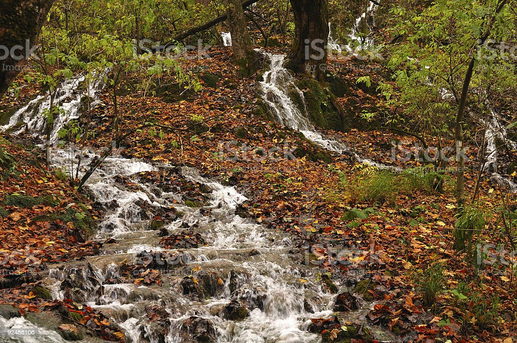 Streams flowing among dead leaves royalty-free stock photo