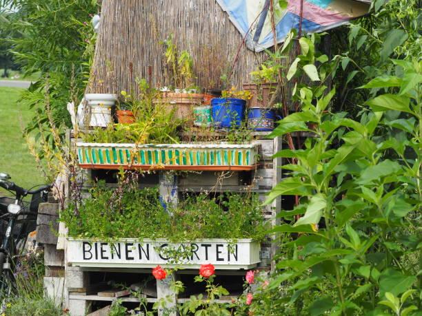 strebergarten, wild in berlin - berlin tempelhof stock-fotos und bilder