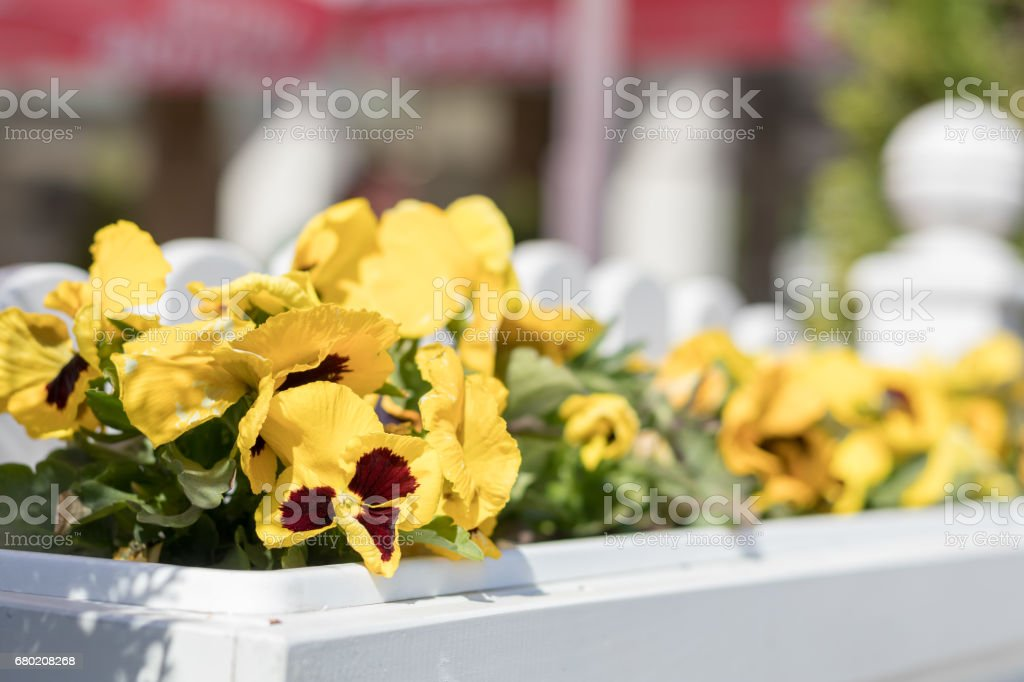Street cafe flowers and herbs decor concept. royalty-free stock photo