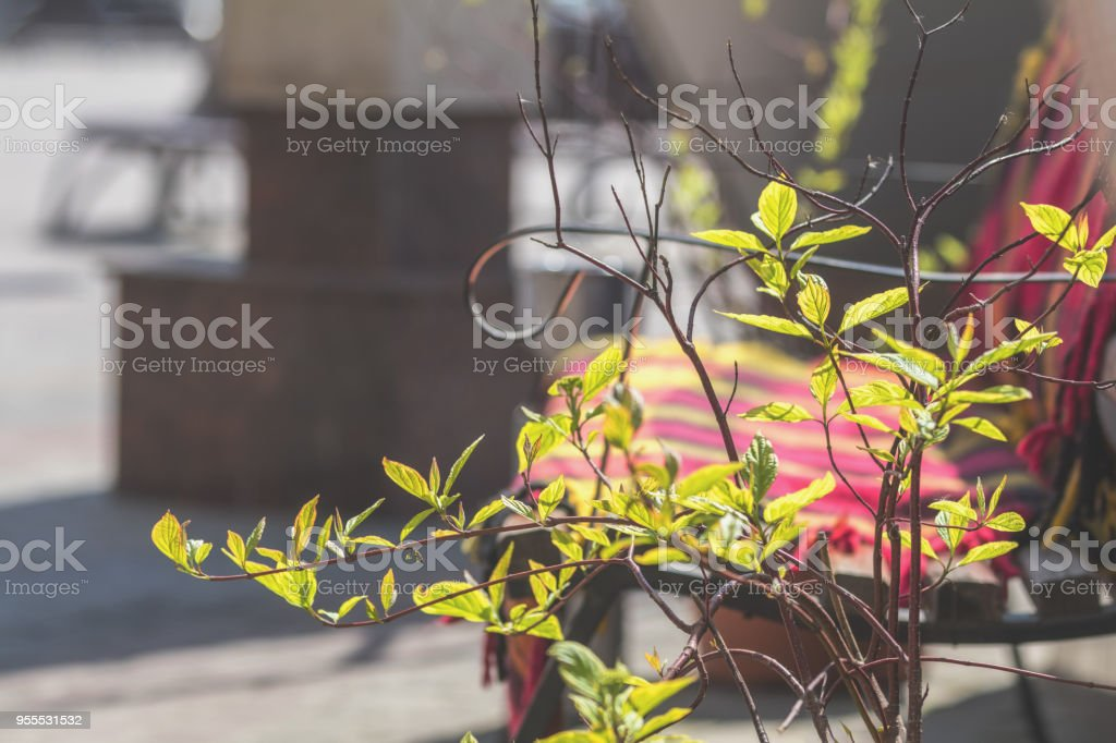 Street cafe herbs decor concept. Green bush in the pot at the cafe stock photo