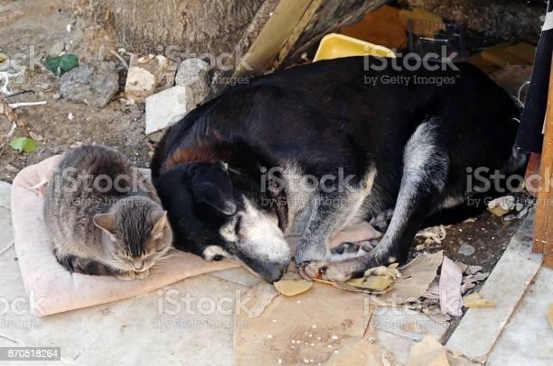 Street cat and dog picture id870518264?b=1&k=6&m=870518264&s=612x612&h=vdxwyhho8mb6q3i7dvyjiorotnvrlxygh6cc7mucges=
