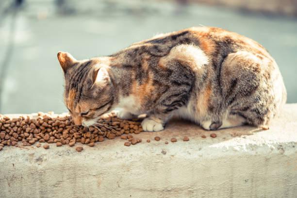 Street cat and food picture id1075040878?b=1&k=6&m=1075040878&s=612x612&w=0&h=kanajrgbffh39nxih omnhlevi enrhbrwslxztgcnq=