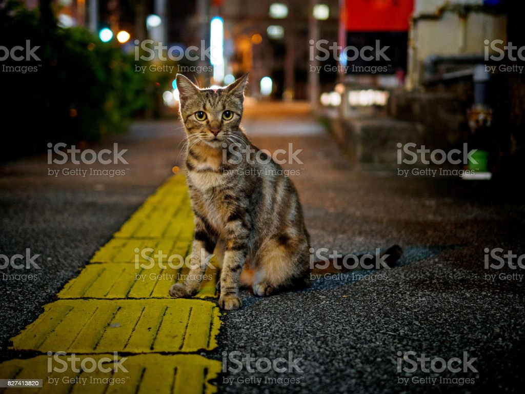 street cat at night stock photo
