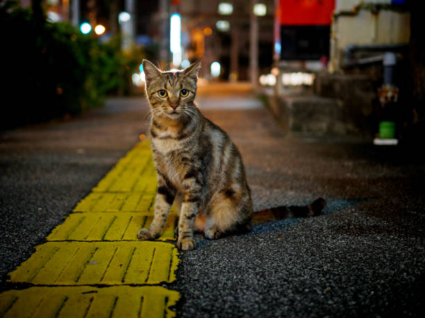 street cat at night street cat at night in Naha, Okinawa naha stock pictures, royalty-free photos & images