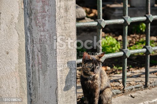Street cat black and yellow standing on windows of ottoman tombs in beyazit istanbul with green leaves background.