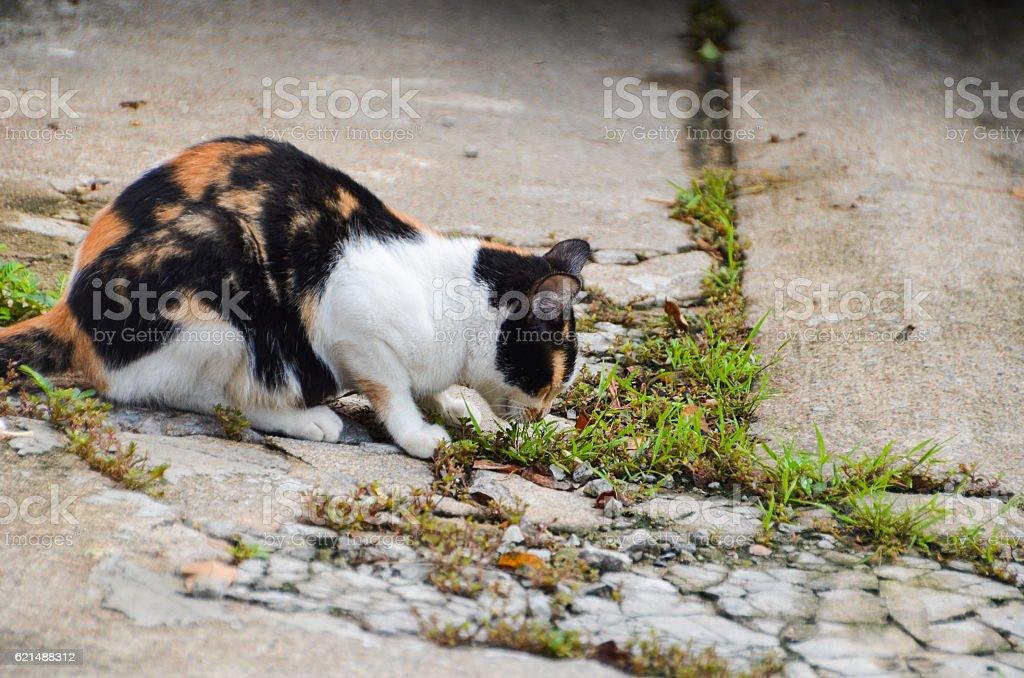 street cat eating grass Lizenzfreies stock-foto