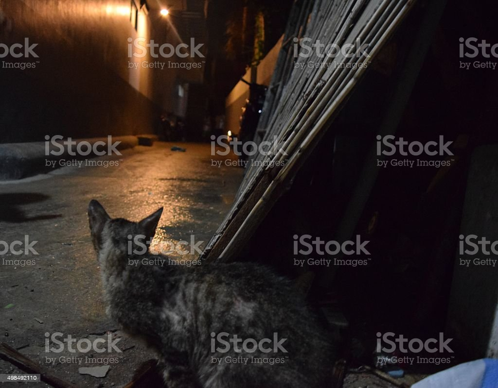 Street cat in alley. stock photo