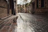 Street Cat in Antalya