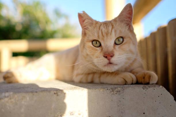 street cat in Japan stock photo