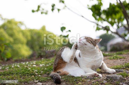 Street cat resting on street