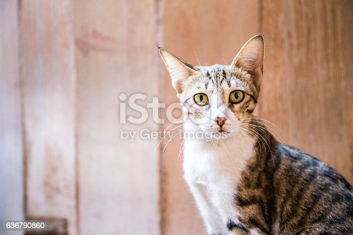 Street cat sitting calmly as it stares at the camera