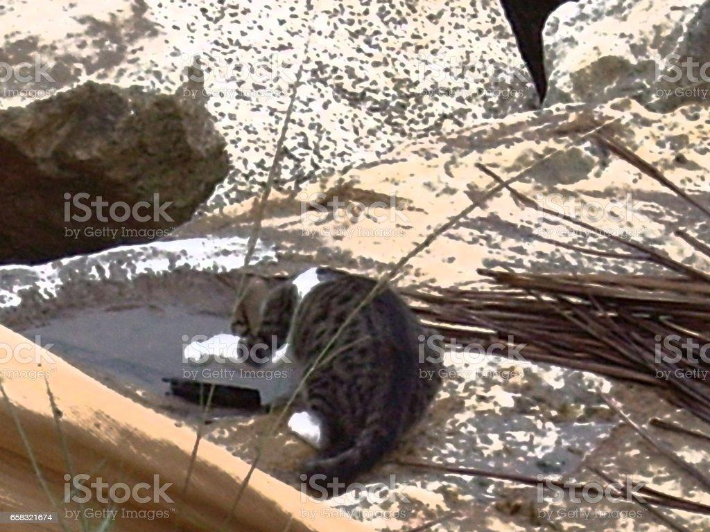 Street CatModels stock photo