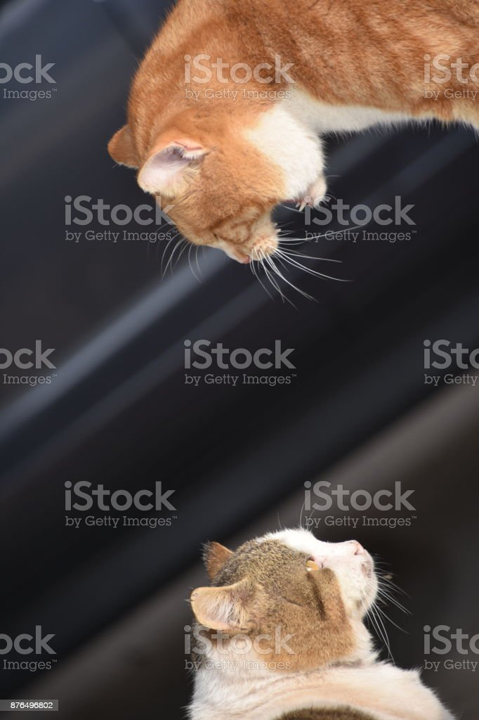 Street cats are fighting on the street stock photo