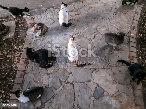 Street cats directly above