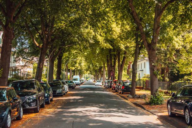 street cubierto con árboles - inmóvil fotografías e imágenes de stock