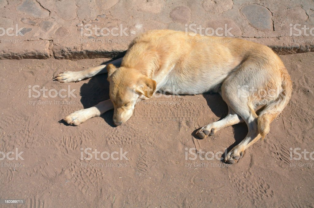Street Dog - Abandonment royalty-free stock photo