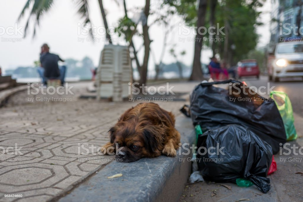 Street dog in Hanoi, Vietnam stock photo
