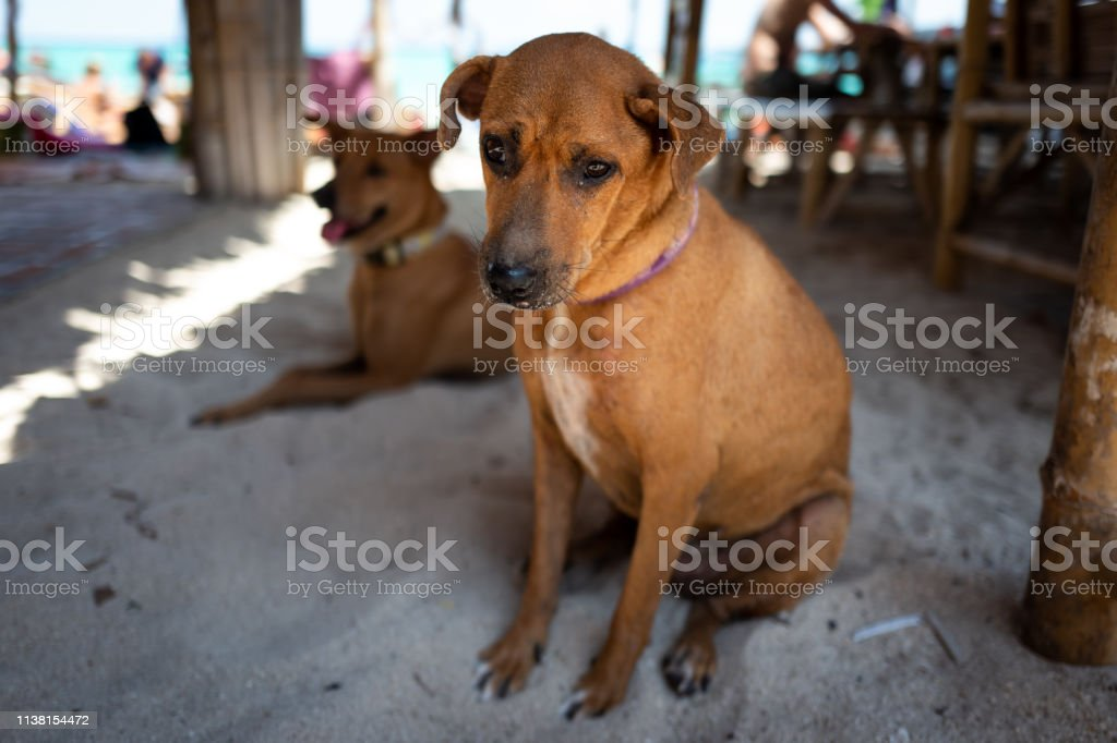Straßenhund in Koh Lipe, Thailand. – Foto