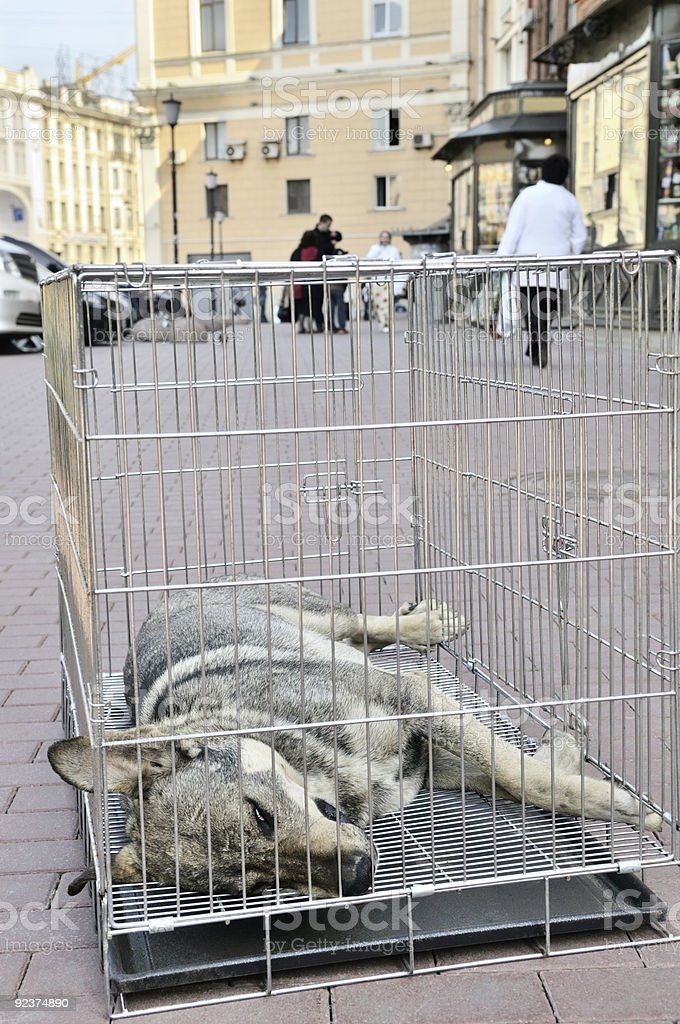 Street dog in transport cage. royalty-free stock photo
