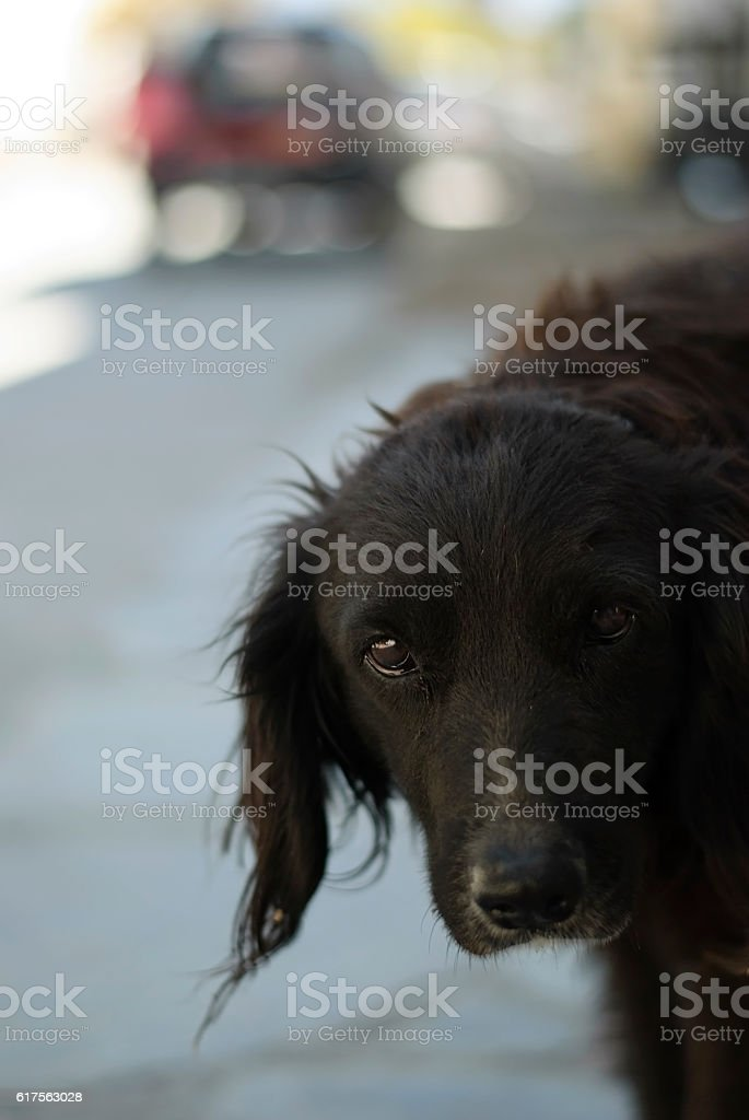 Street dog looking very sad being abandoned and lonely foto