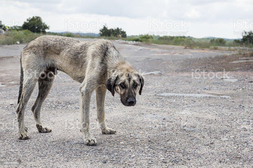 street perro - foto de stock