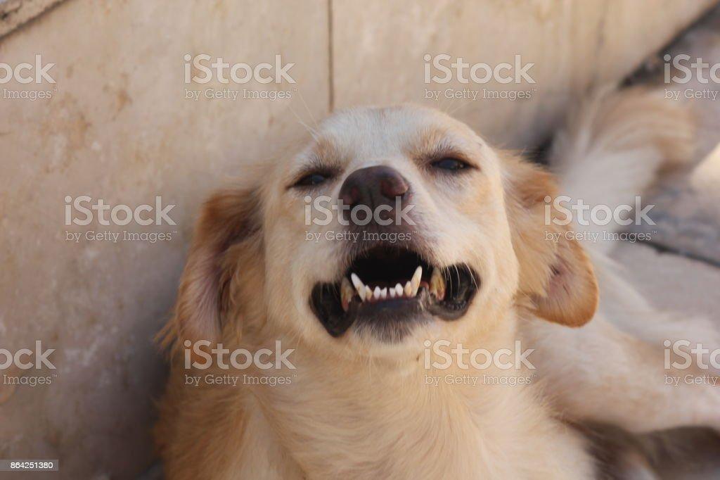 street dog royalty-free stock photo