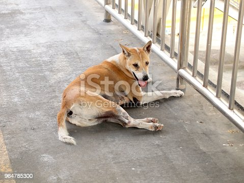 Street Dog Stock Photo & More Pictures of Abandoned