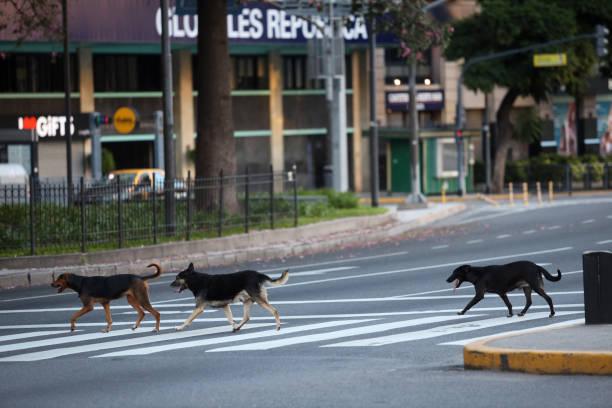 Street Dogs – Foto