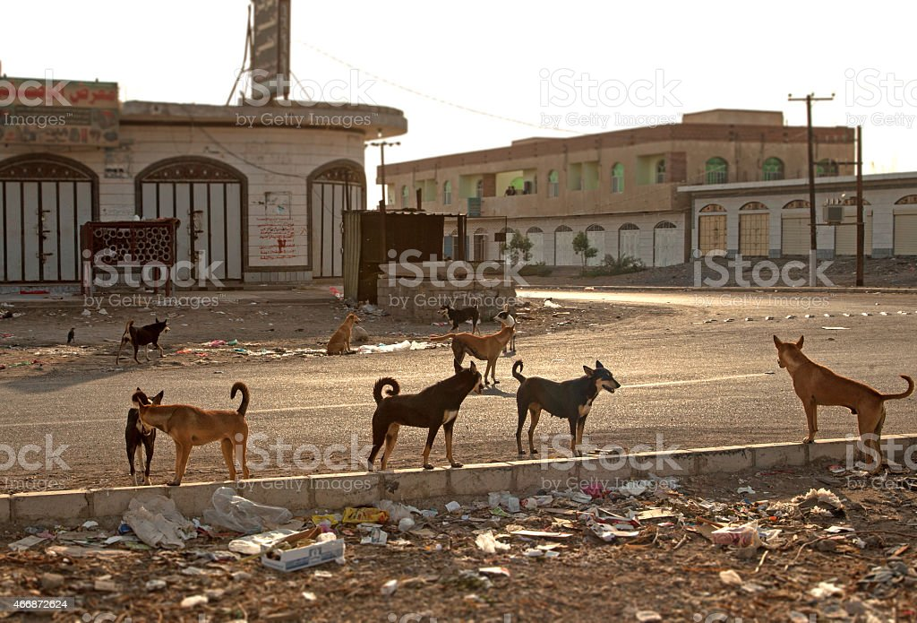 Street Hunde – Foto