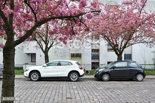 825525754istockphoto Street in a residential area of Berlin with parked cars and pink flowering almond trees in spring. 825525754