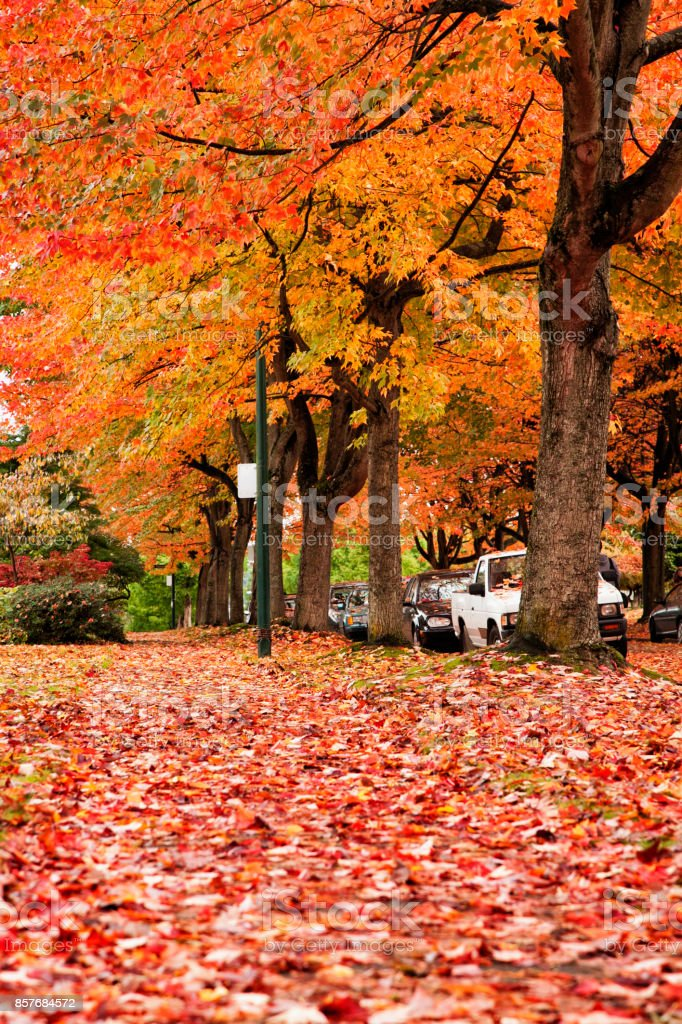 Street in autumn color, Vancouver, Canada stock photo