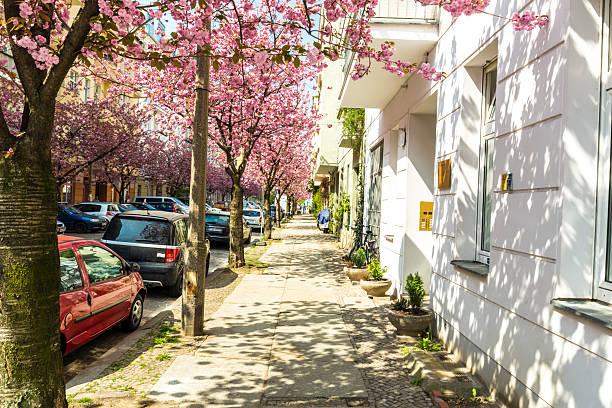 straße in berlin mit kirsche bäume - kreuzberg stock-fotos und bilder