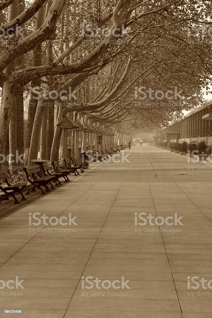 Street in the fog royalty-free stock photo