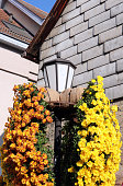 Street lamp decorated with beautiful colorful Chrysanthemums during the annual Chrysanthemum Festival in Lahr, Germany