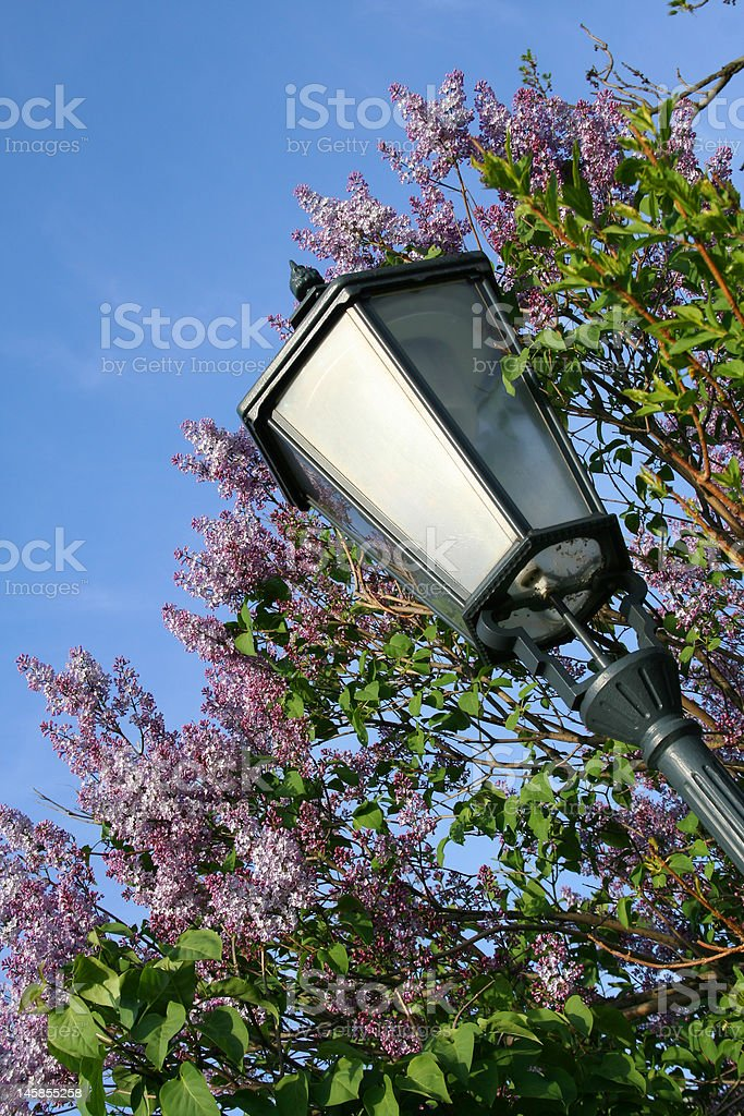 Street Lantern in blooming lilac flowers royalty-free stock photo
