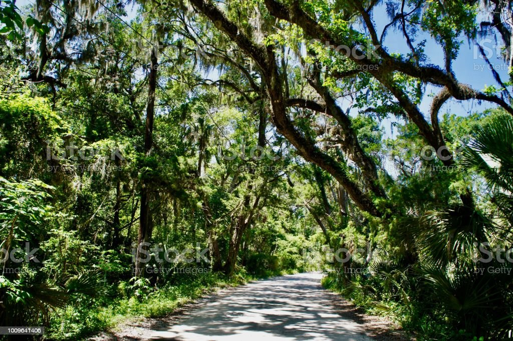 A narrow road covered in a live oaks and Spanish moss.