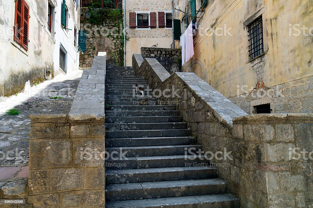 Street of Old Kotor, Montenegro Ladder with three cats waiting Lizenzfreies stock-foto