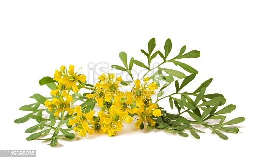 Herb of Grace flowers  isolated on white