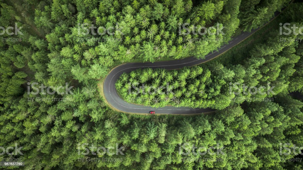 Street surrounded by pine trees. royalty-free stock photo